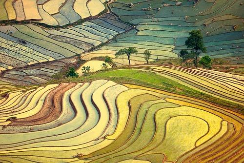 exusus :     Chiều vàng thung lũng (by  Haikeu )