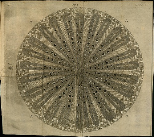iheartloons :     The Anatomy of Vegetables .  Found  here  via  BibliOdyssey .