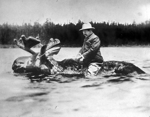 splitmyselfintwo :       Theodore Roosevelt riding on a moose.     like a boss     He's really enjoying this.