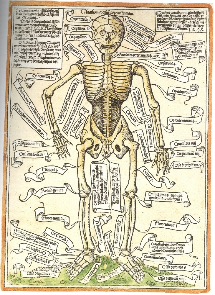 lonerwitch: Anathomia ossium corporis humani, the oldest surviving anatomical rendering of the human skeleton. Apparently this caused an uproar in the science world after nearly eight centuries of repression by religious groups that maintained hegemony throughout the dark ages. Hieronymus Brunschwig, 1497. Did someone say oldest surviving anatomical rendering of a skeleton?!