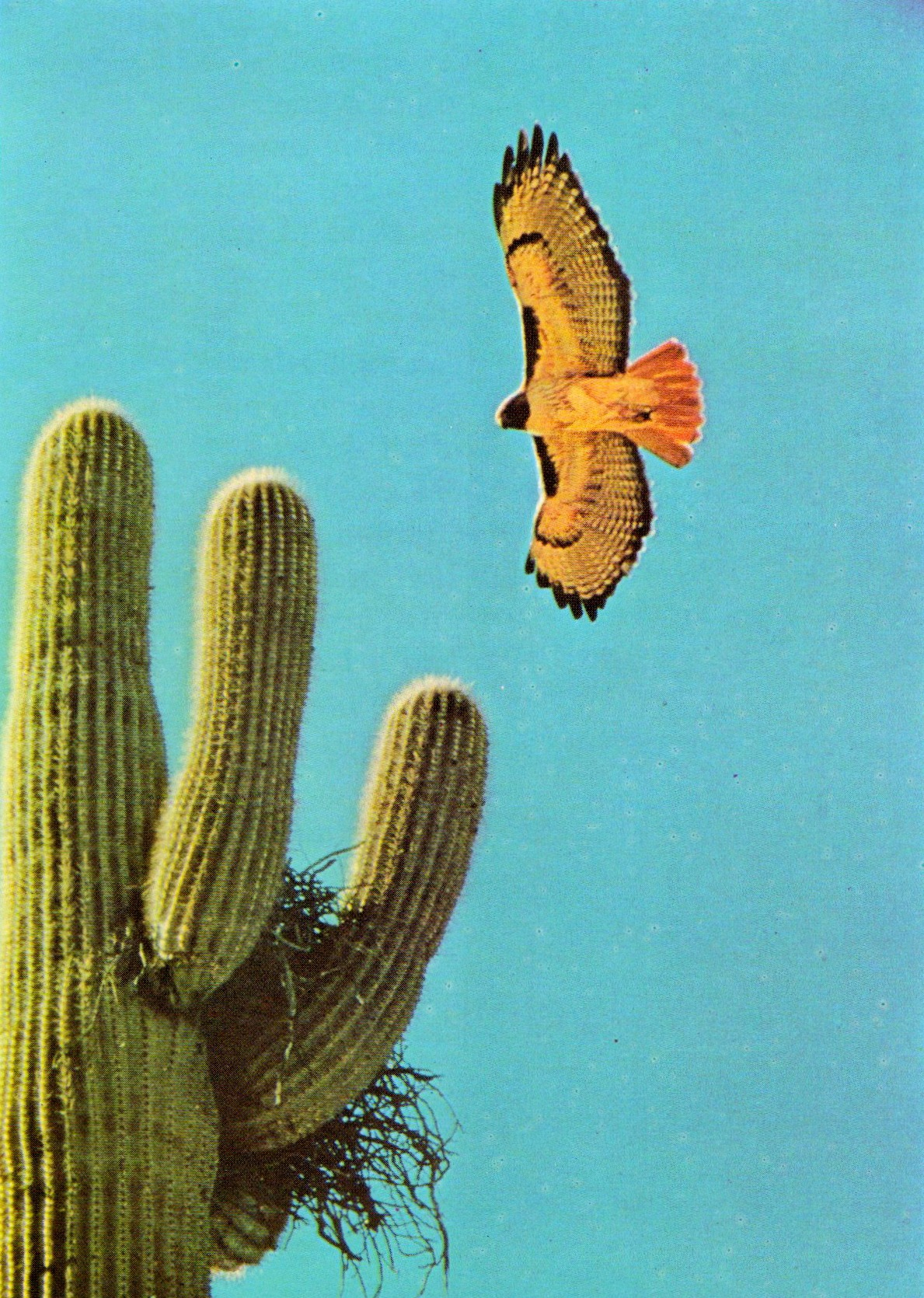 "gretchenjonesnyc: ""The Life of the desert"".  Ann and M. Suton. 1966."