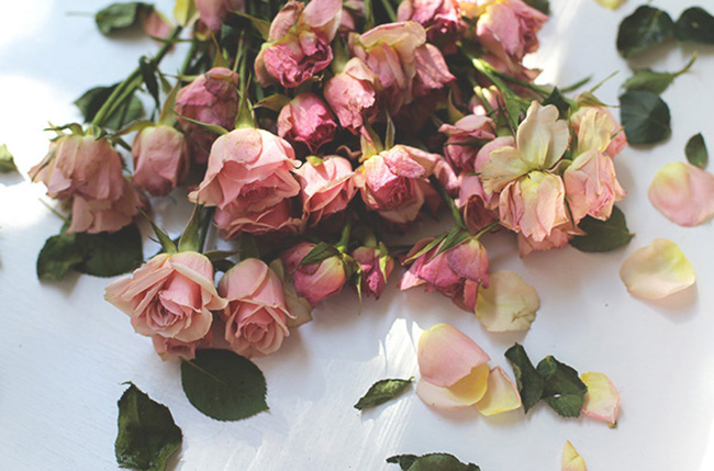 The Art of Drying Roses (1)