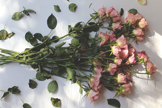 The Art of Drying Roses (11)