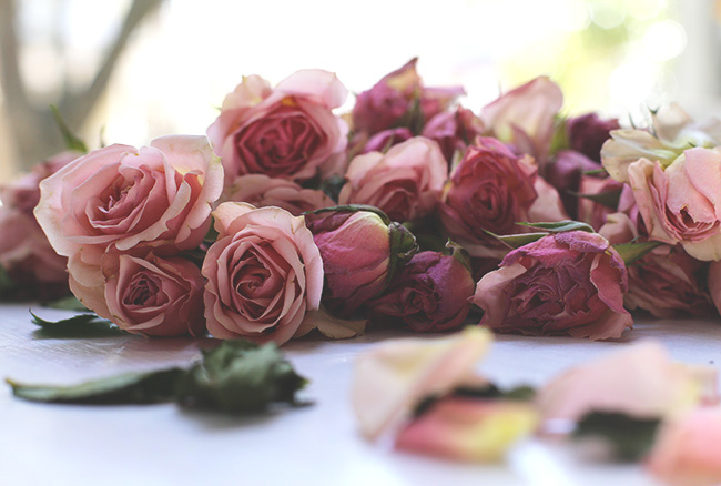 The Art of Drying Roses (13)
