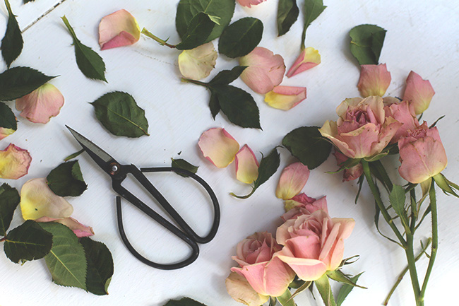 The Art of Drying Roses (2)