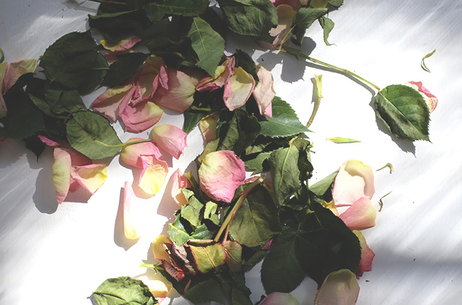 The Art of Drying Roses (4)