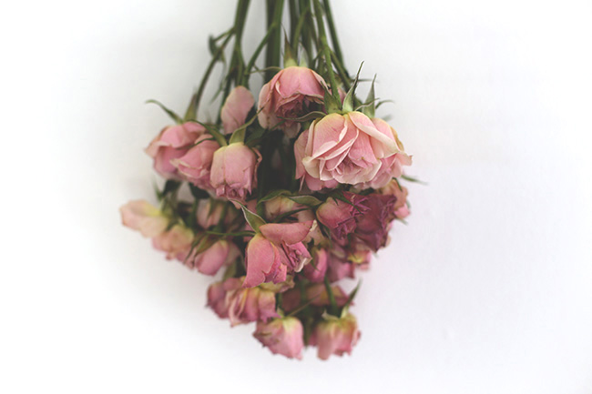 The Art of Drying Roses (6)