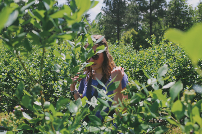 Blueberry Picking (5)