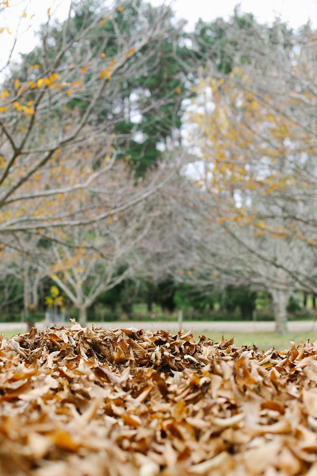 Sassafras Chestunut Farm-2.jpg
