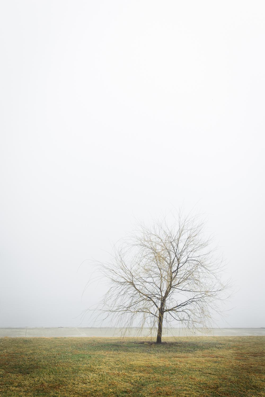 Lean Timms Canberra Fog (9 of 21).jpg
