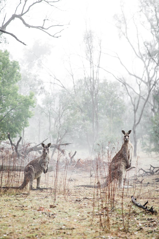 Lean Timms Canberra Fog (15 of 21).jpg