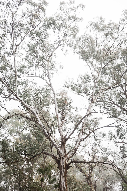 Lean Timms Canberra Fog (16 of 21).jpg