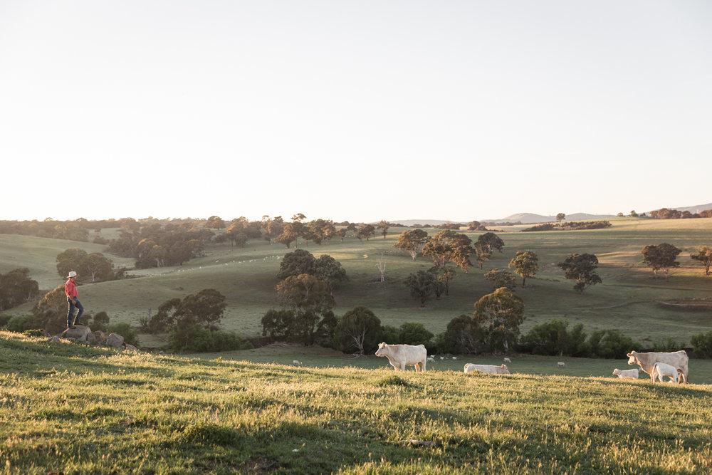 Lean Timms Beef Australia Road Trip (3 of 35).jpg