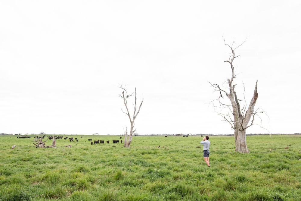 Lean Timms Beef Australia Road Trip (9 of 35).jpg