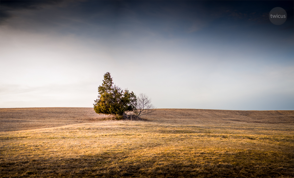 Last of Winter (Manassas Battlefield Park, Manassas, VA. 2015)