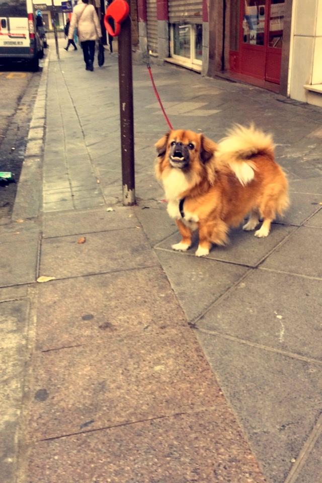The ugliest dog alive