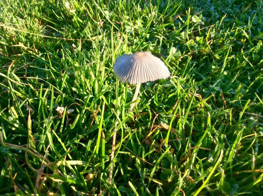 A mushroom that grew overnight