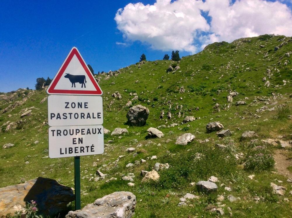"""pastoral zone, free-roaming herds/flocks"""