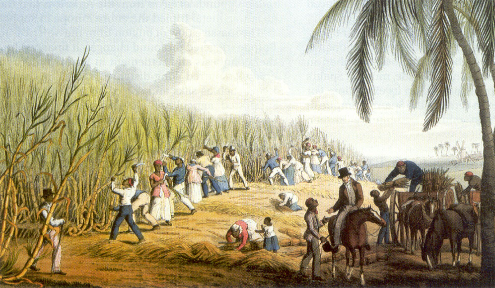 Cutting the Sugar Cane, Antigua, aquatint by William Clark (1823). Source: British Library