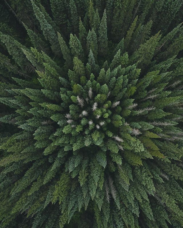 Mindfulness isn't difficult, we just need to remember to do it. What are your weekend plans? 🌲 #inspire2 #dji #dronestagram #naturebeauty @hellobc