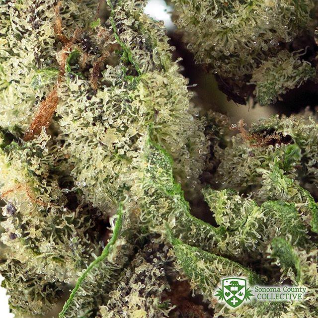 #Macro shot of our greenhouse #OGKush 👌#SCC707#CherryKolaFarms #mmj#prop215#bho#cannabis#cannabiscommunity#staylifted#bhomb#dabbersdaily#weedofig#wax#dabs#shatter#dab#errl#dank#topshelflife#onlysmokethefinest#weedporn#instaweed#weedstagram#hightimes#maryjane#liveresin#710#420#kush
