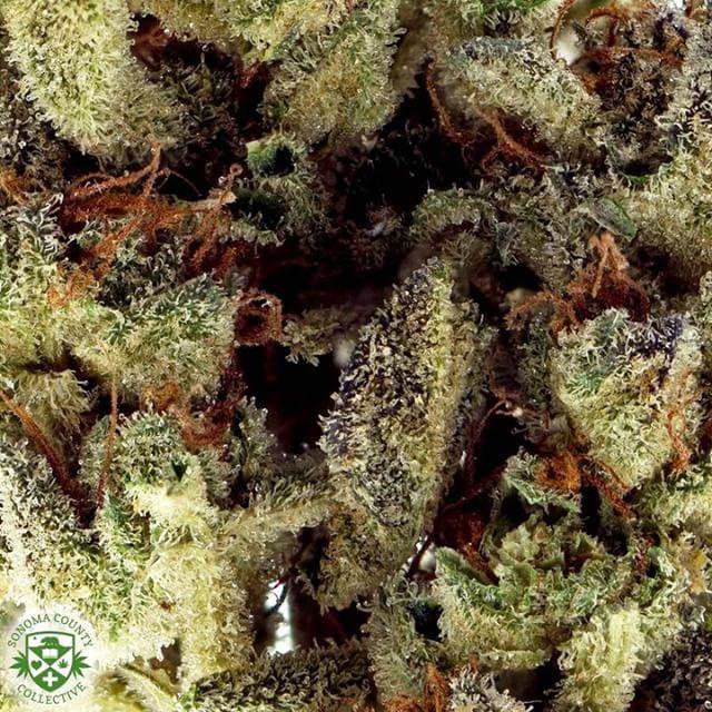 #Macro shot of our 🆕 Greenhouse #Dosidos #scc707#mmj#prop215#bho#cannabis#cannabiscommunity#staylifted#bhomb#dabbersdaily#weedofig#wax#dabs#shatter#dab#errl#dank#topshelflife#onlysmokethefinest#weedporn#instaweed#weedstagram#hightimes#maryjane#liveresin#710#420#kush