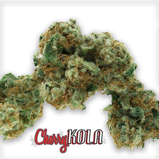 Greenhouse #CherryKola  #SCC707#cherrykolafarmsmmj#prop215#bho#cannabis#cannabiscommunity#staylifted#bhomb#dabbersdaily#weedofig#wax#dabs#shatter#dab#errl#dank#topshelflife#onlysmokethefinest#weedporn#instaweed#weedstagram#hightimes#maryjane#liveresin#710#420#kush