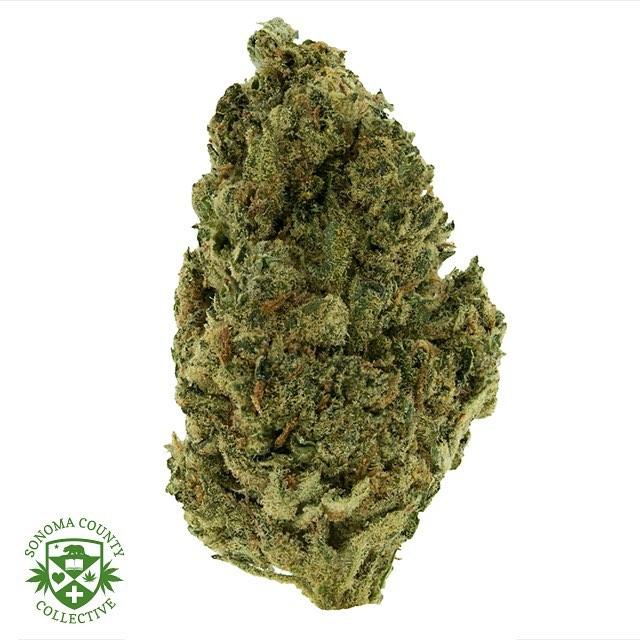 ☀️🏠Greenhouse 🍓😤Strawberry Cough😤🍓 #mmj#prop215#bho#cannabis#cannabiscommunity#staylifted#bhomb#dabbersdaily#weedofig#wax#dabs#shatter#dab#errl#dank#topshelflife#onlysmokethefinest#weedporn#instaweed#weedstagram#hightimes#maryjane#liveresin#710#420#kush