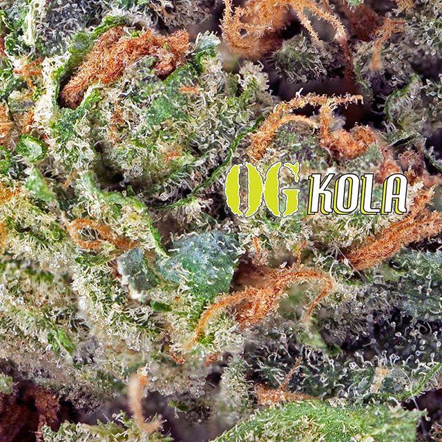 #macro shot of the indoor #OGKola 💎💎 #scc707#cherrykolafarms#mmj#prop215#bho#cannabis#cannabiscommunity#staylifted#bhomb#dabbersdaily#weedofig#wax#dabs#shatter#dab#errl#dank#topshelflife#onlysmokethefinest#weedporn#instaweed#weedstagram#hightimes#maryjane#liveresin#710#420#kush