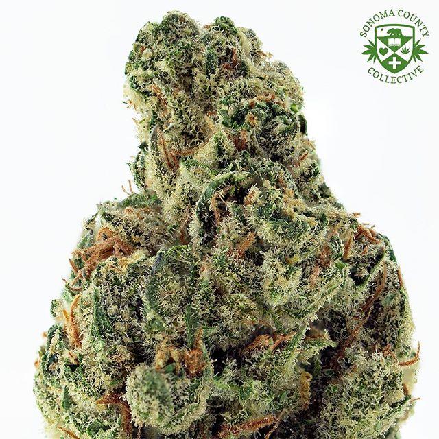 🍓⛽️Greenhouse Strawberry Diesel ⛽️🍓 #mmj#prop215#bho#cannabis#cannabiscommunity#staylifted#bhomb#dabbersdaily#weedofig#wax#dabs#shatter#dab#errl#dank#topshelflife#onlysmokethefinest#weedporn#instaweed#weedstagram#hightimes#maryjane#liveresin#710#420#kush