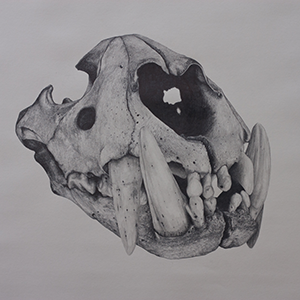 Panther Skull Chris Otley