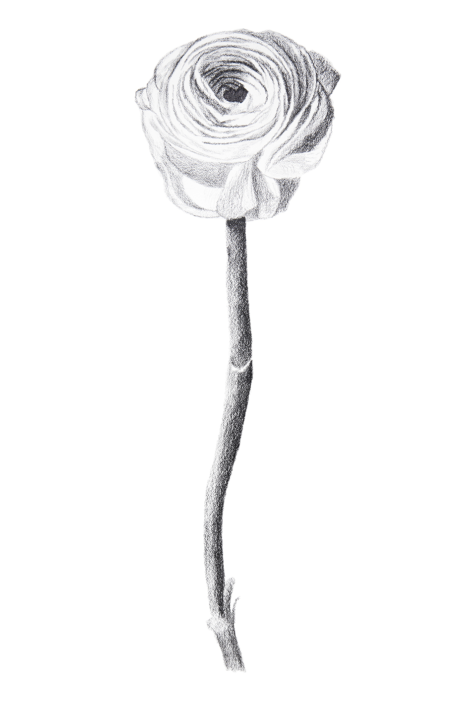 Flower Study 1 small.jpg