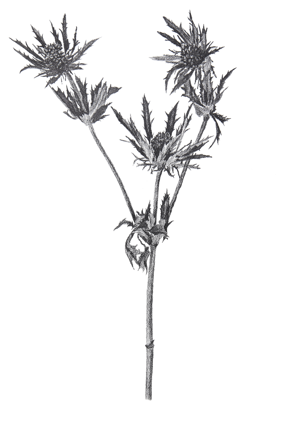 Flower Study 3 small.jpg