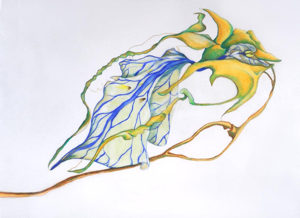 Cowskull Bird-Orchid.JPG