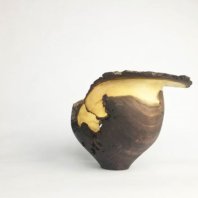 Walnut vessel. Half eaten by ants.
