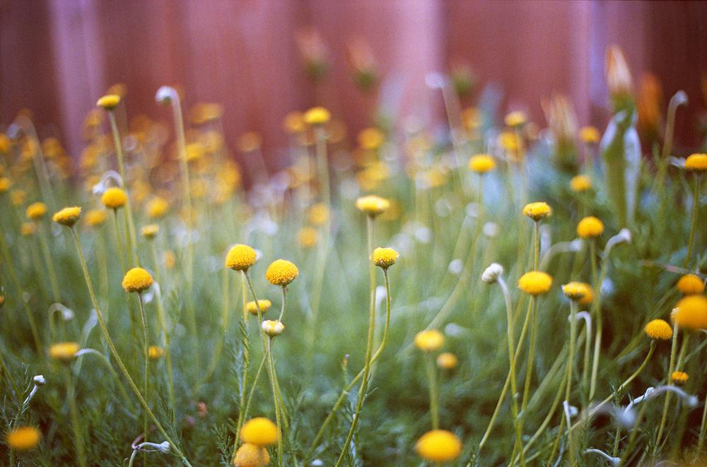 10.17.13-sc flowers.jpg