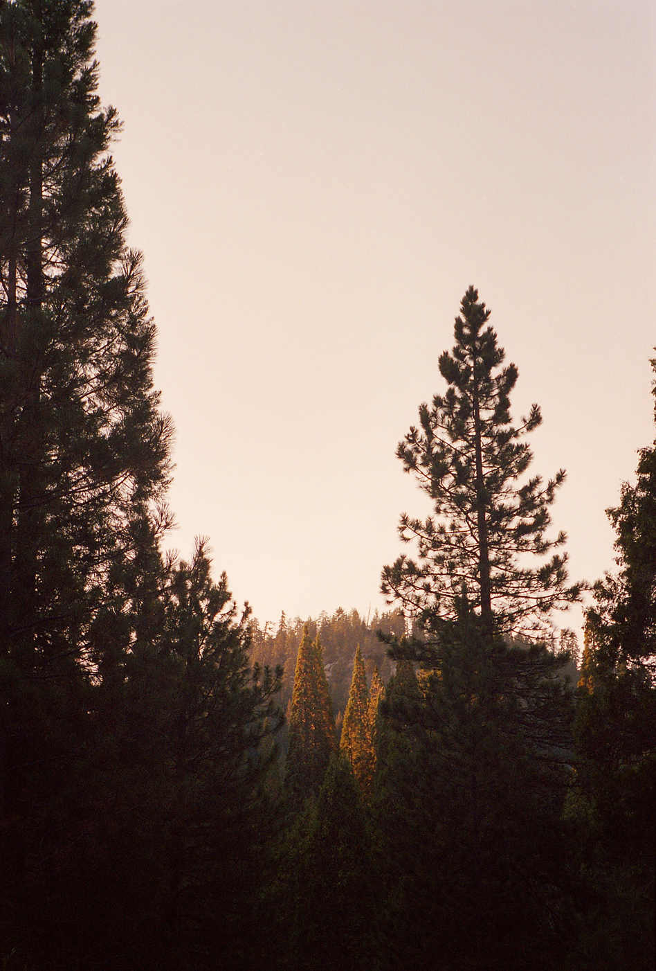 10.29.13-CA_kings canyon trees.jpg