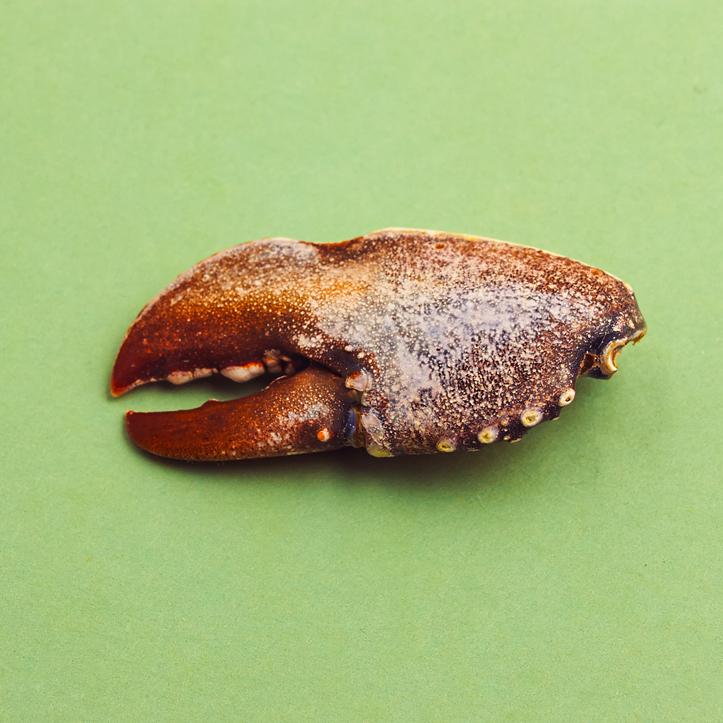 11.19.13_C1-crab claw.jpg