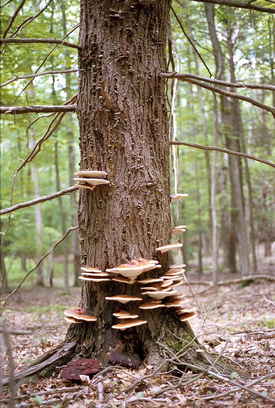 7.12.13-fungi.jpg