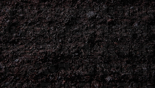 560px_Martin_Krause,_Dark_soil_No_2.jpg