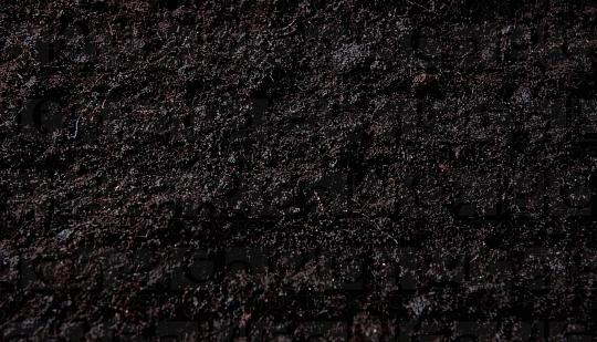 560px_Martin_Krause,_Dark_soil_No_2.jpg