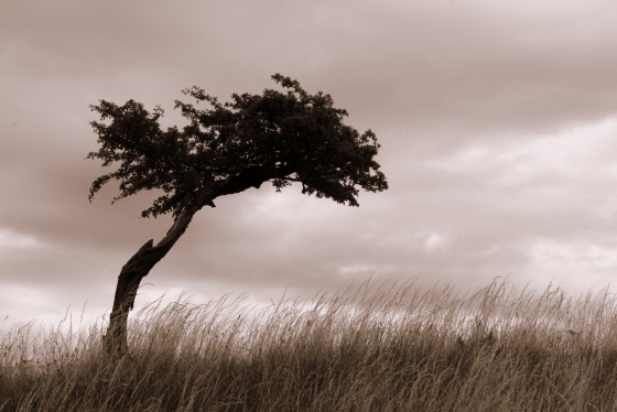 560px_tree_in_field_file0001584610234.jpg