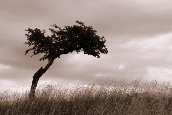 560px_tree_in_field_file0001584610234.jpg
