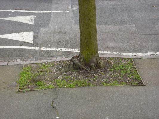 1-root-zone.jpg