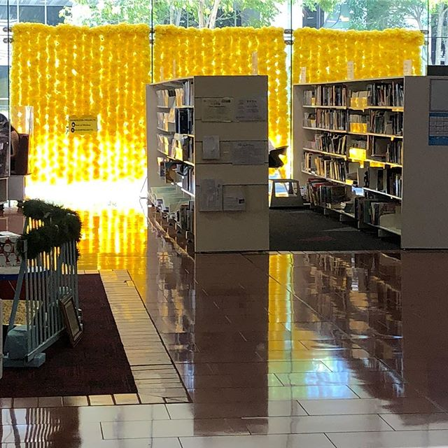 All a glow at #blacktowncitylibraries #maxwebberlibrary 🌼😀🌼