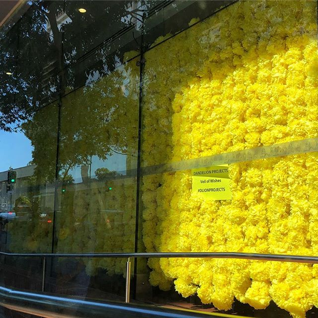 Over 2000 tissue paper #dandelions made by many hands now hanging together as a glorious #veilofwishes at #maxwebberlibrary 🌼😊🌼