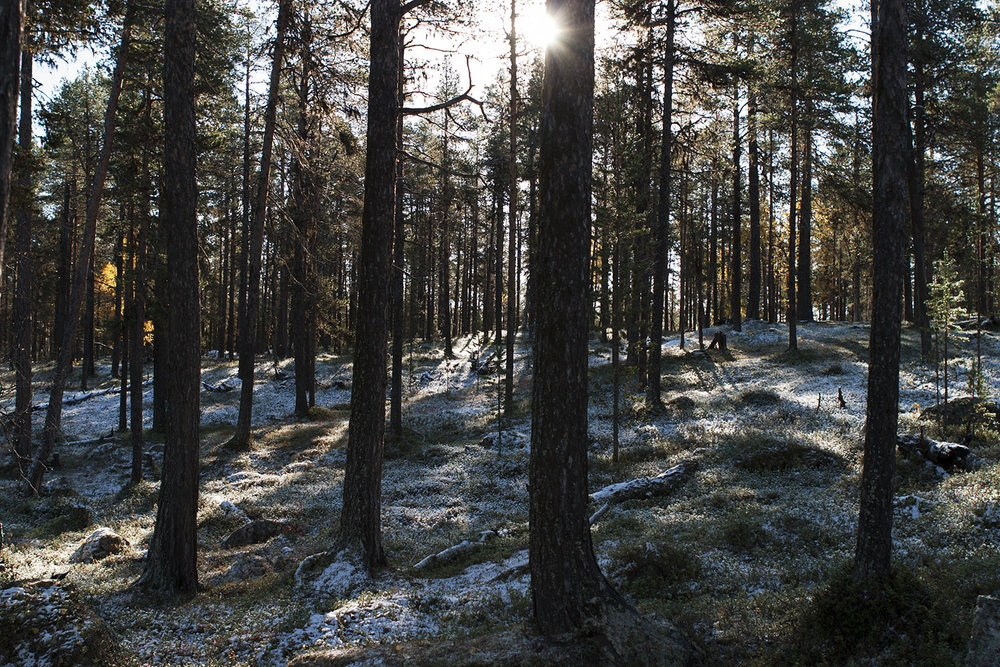 Lapland, England