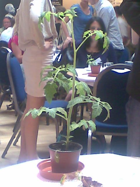 wwf tomato.jpg