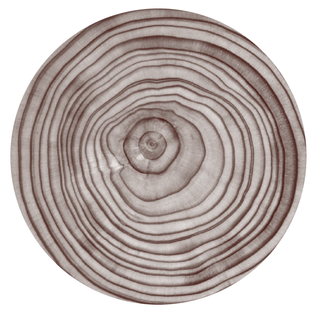 still tree rings 2.png