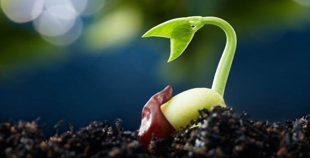 Image:  US Dept of Agriculture  via flickr.